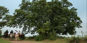 ombu en la bamba