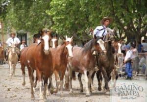 criollo horse areco estancia