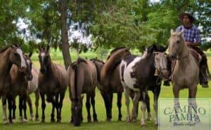 criollo horse estancia ombu