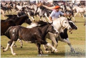 gaucho day tradition