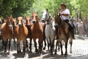 gaucho tradition areco tour