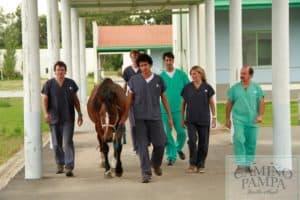 areco tour horses