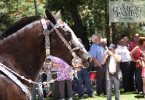 criollo horse buenos aires