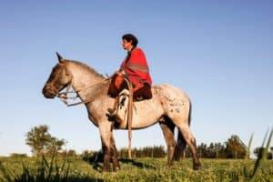 gauchos horse