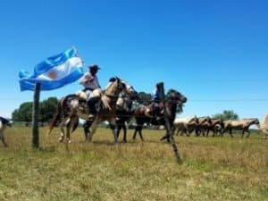 argentina experience in the pampas