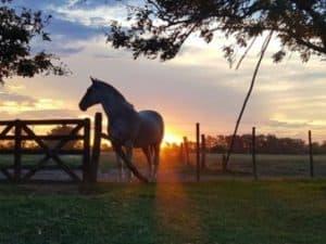 argentina experience horses